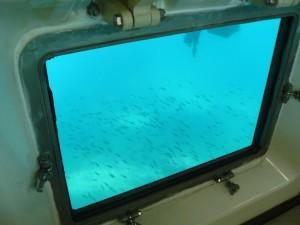 海中の様子03