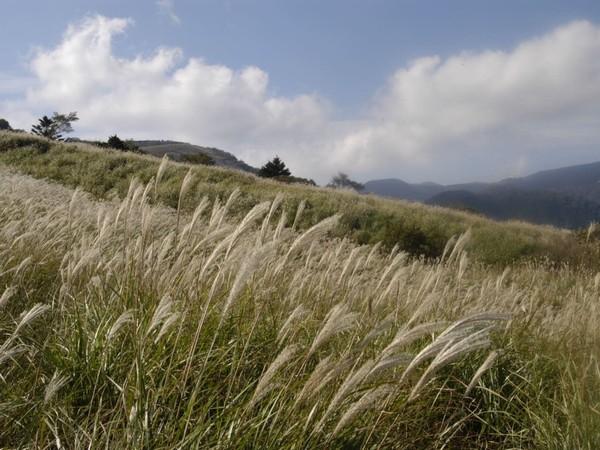 稲取細野高原すすき