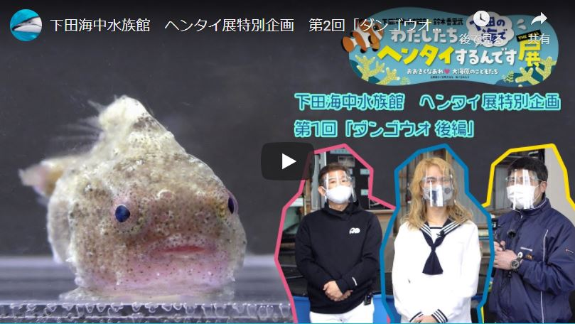 水族館 下田 海中